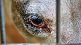 Animal_Cruelty.jpg