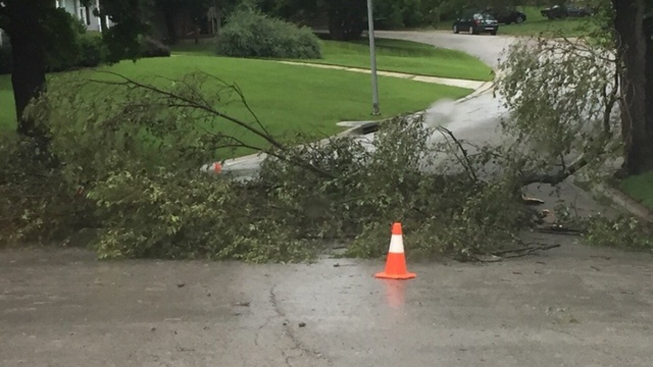 PHOTOS: Storms bring down limbs, knock out power