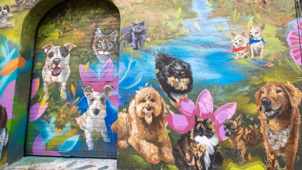 The _Ultimate Pet Portrait_ mural in Wynwood, organized by the pet supply company, Chewy.jpg
