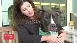 Paws & Claws: Summer Pet SafetyTips