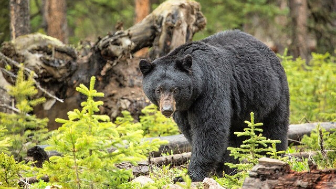 Man says bear bit his hip after he punched it in nose