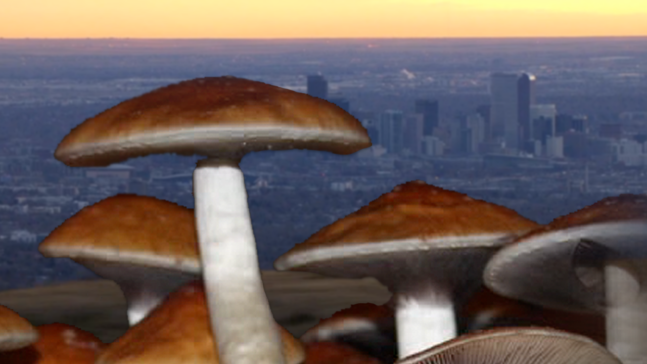 Denver voters narrowly pass 'magic mushroom' measure