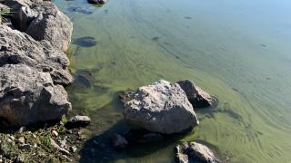 Mantua Reservoir toxic algae