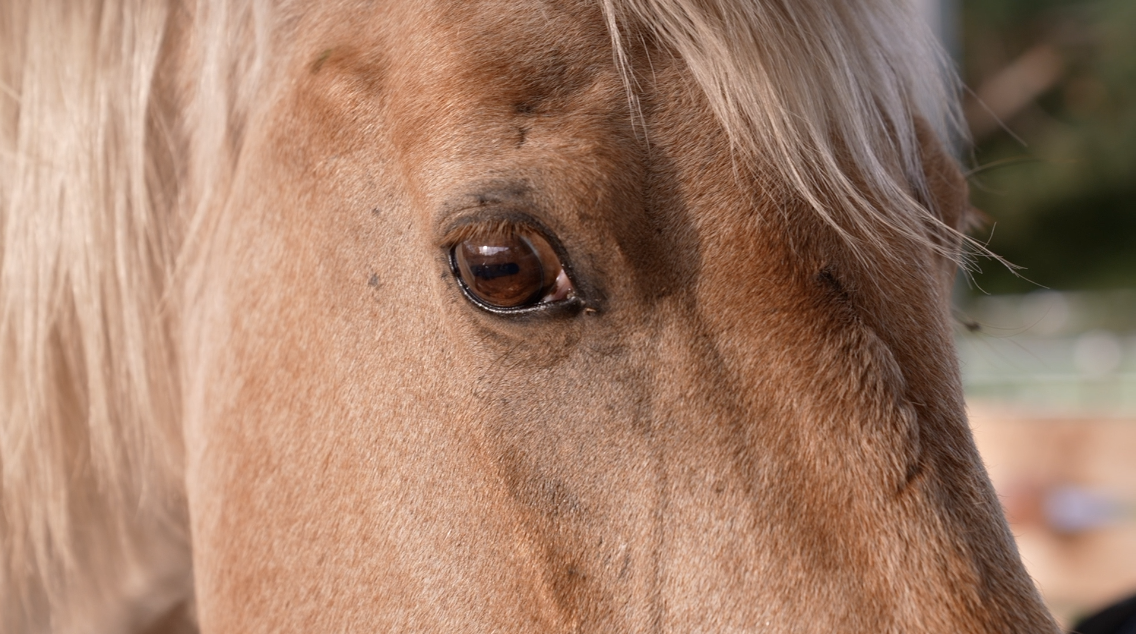 Horses react to people's emotions