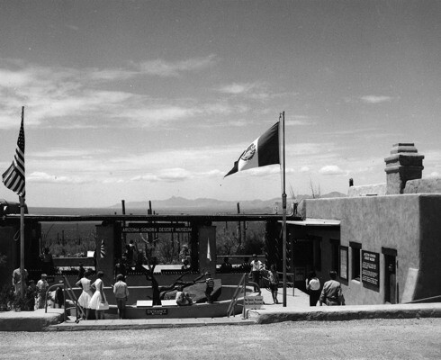 Desert Museum after opening in 1952