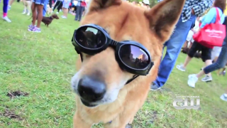 Furry Fix: HSBC Walk For The Animals