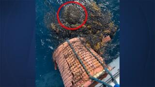 WPTV-GUMBO-LIMBO-SEA-TURTLE-1.jpg