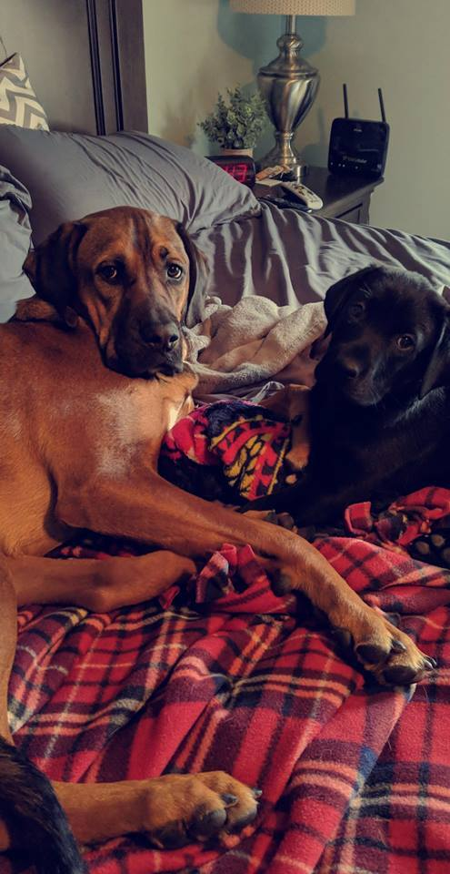 National Pet Day photos from our viewers.