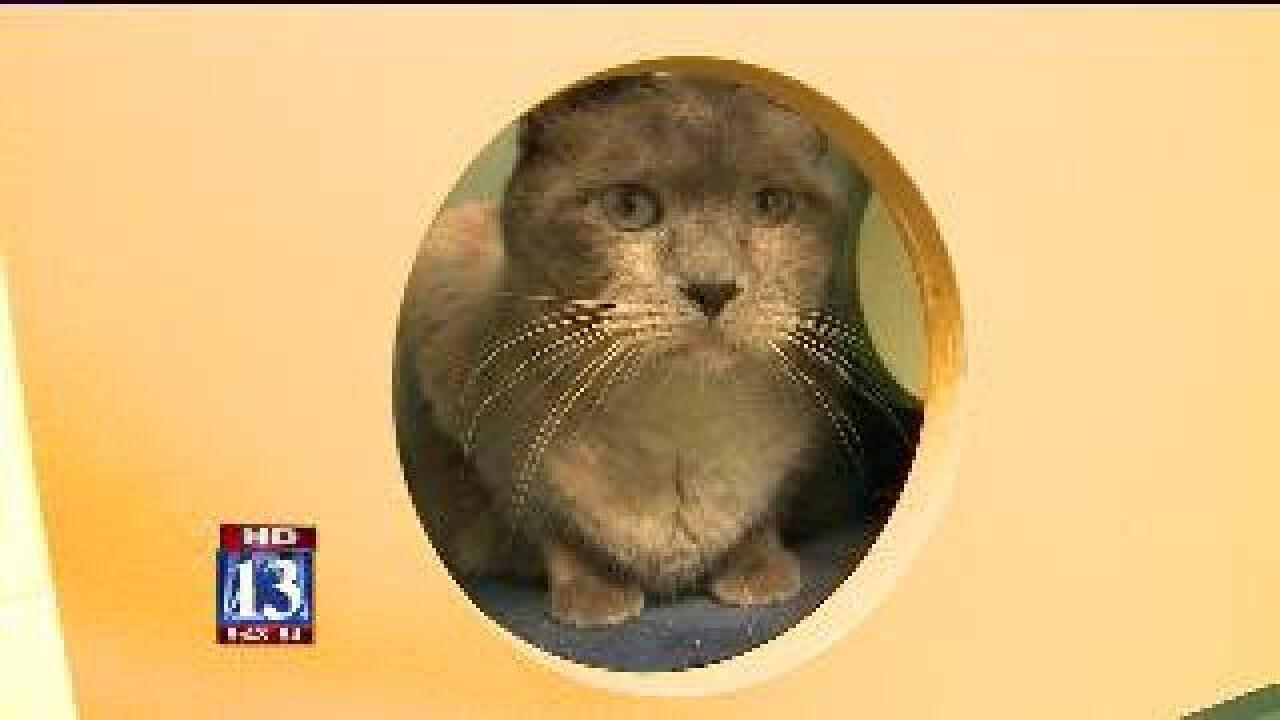 $5 feline event hopes to increase cat adoption