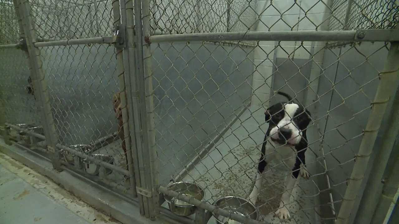 Lorain County Dog Kennel.jpeg