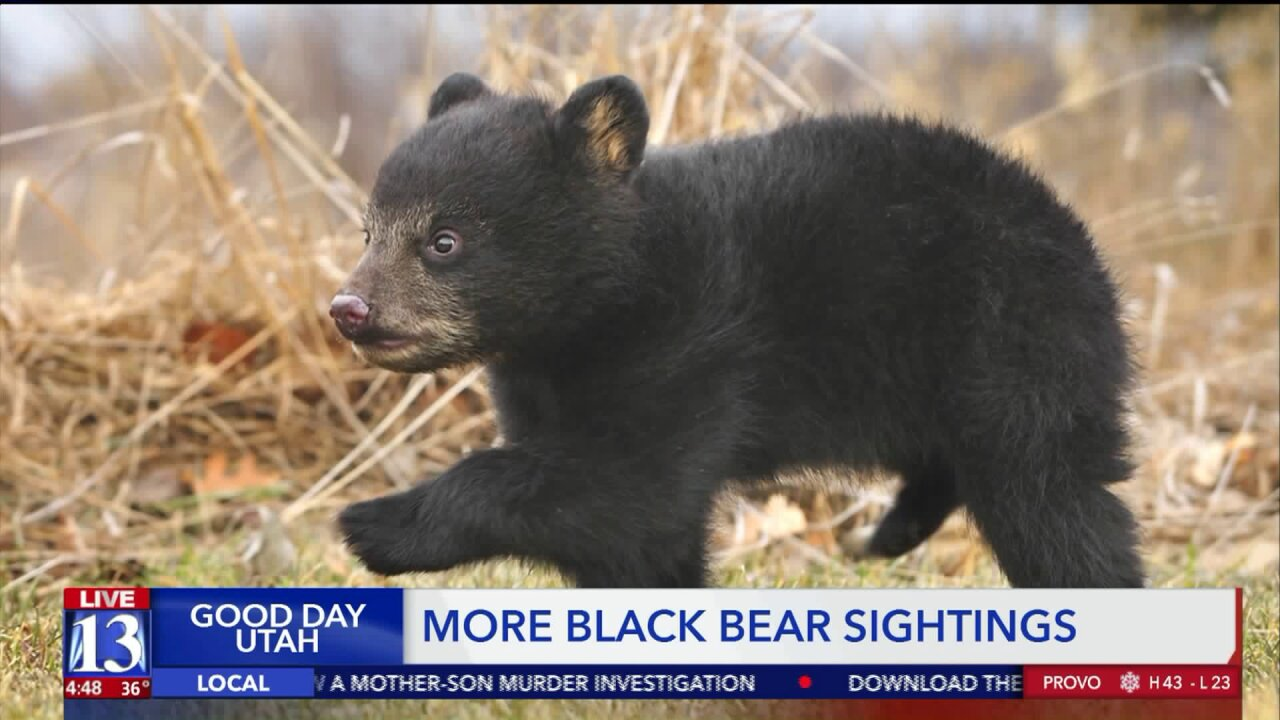 Black bear incidents in Utah nearly double in2019