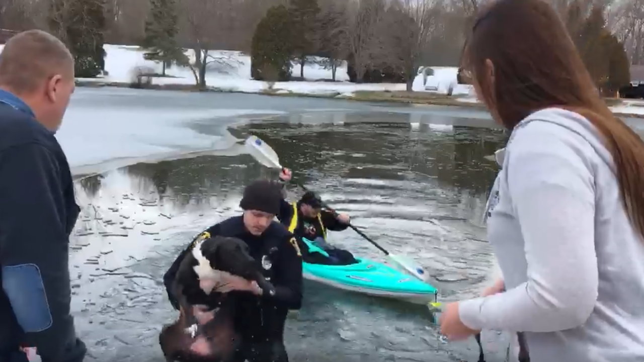 Springfield Township officer rescues dog