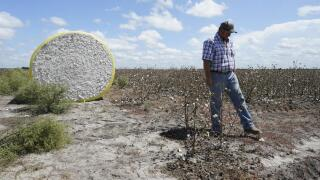Cotton Farm (AP News).jpeg