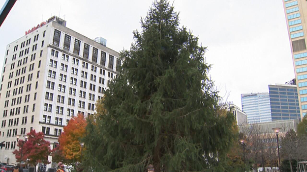 Nashville finds Christmas tree in Murfreesboro