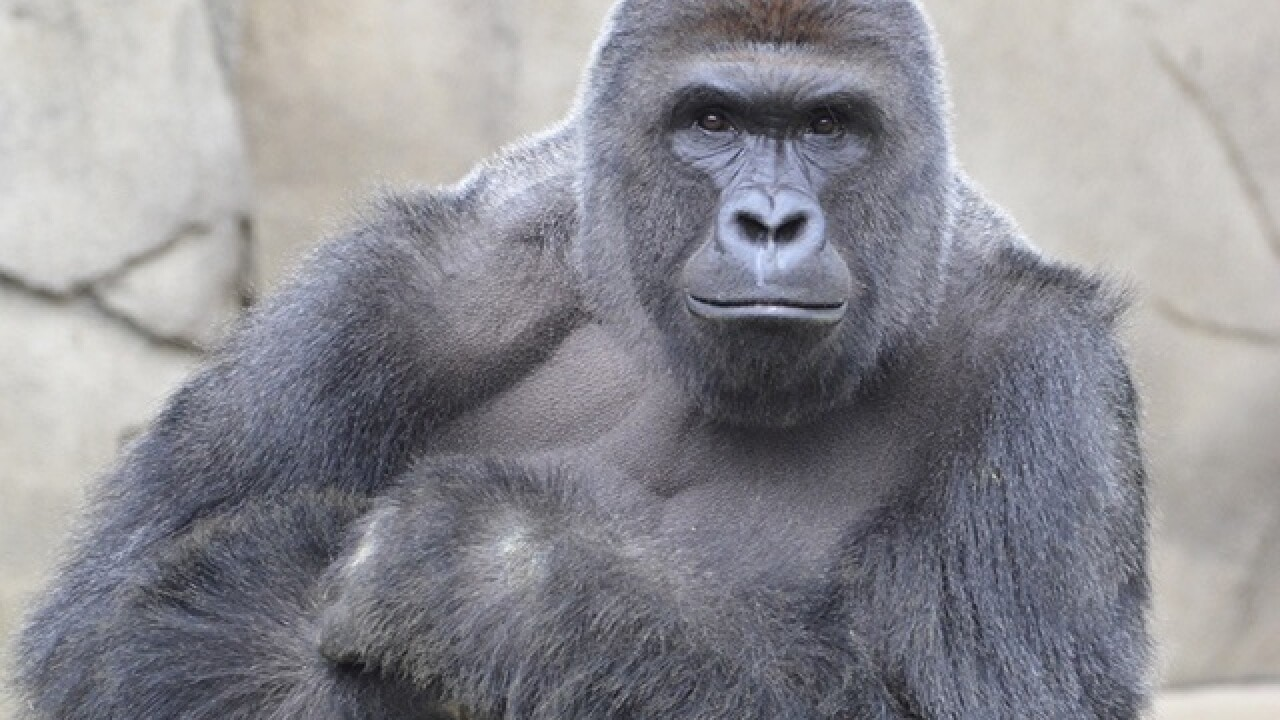 Ohio man charged after acting like a gorilla