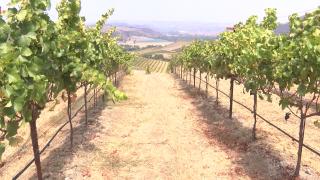 alma rosa winery.PNG