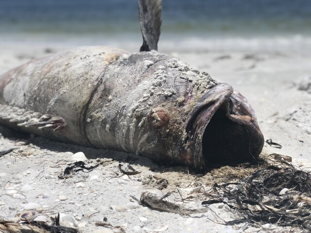 Hundreds of dead fish wash up on Florida beach