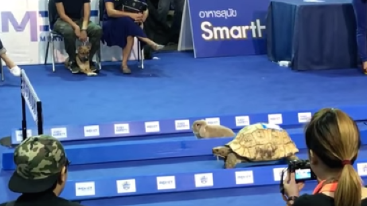 Aesop was right: Tortoise beats hare in head-to-head race