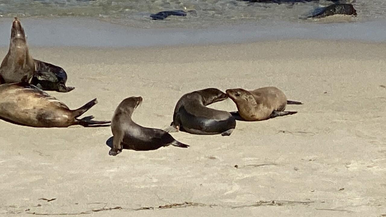 sea lion greeting 2.jpg