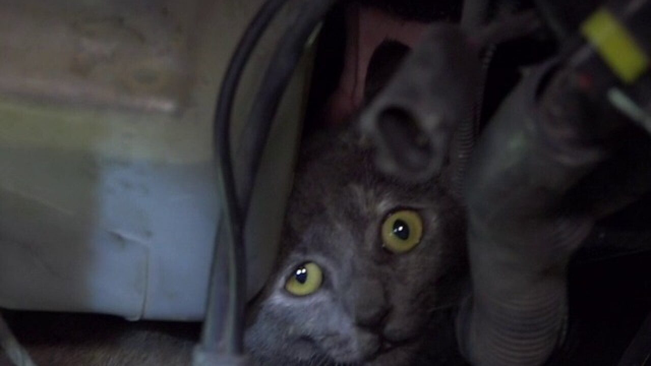 Couple break into van to save trapped cat