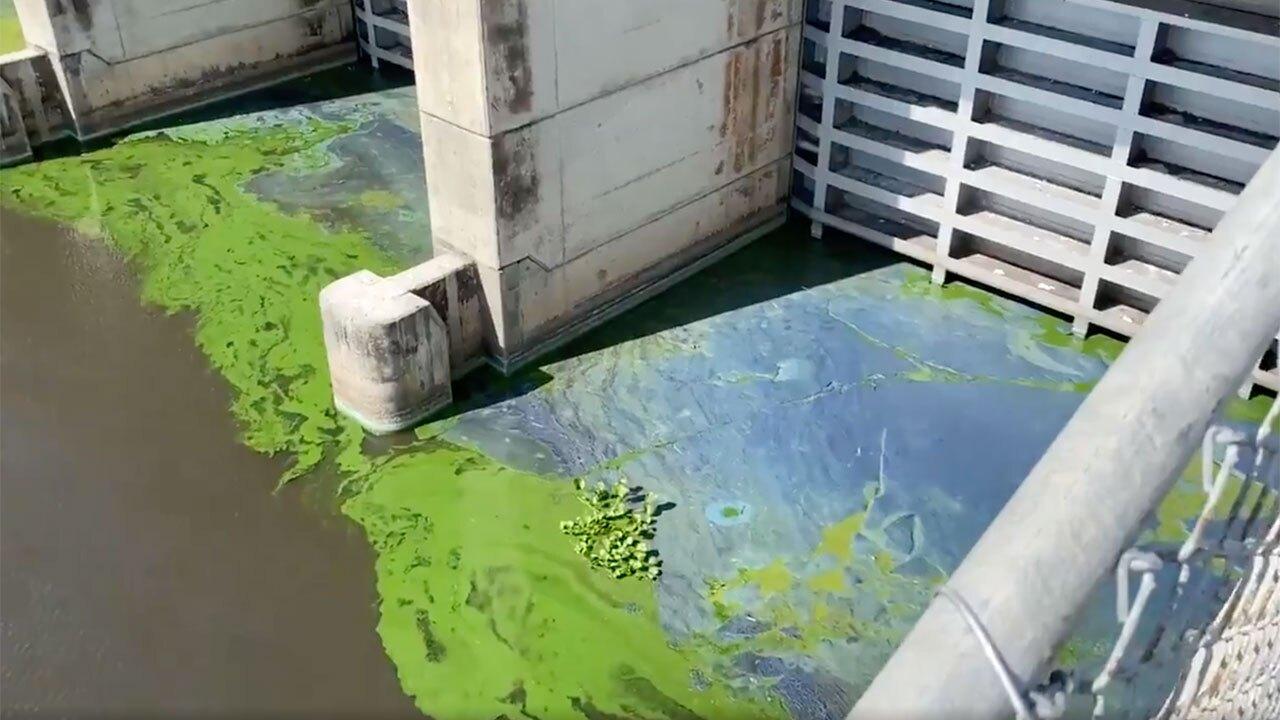 Blue-green algae on canal side of Port Mayaca Lock, May 3, 2021