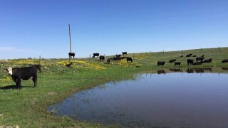 First farm in Montana awarded top NON-GMO certifications for grass fed beef