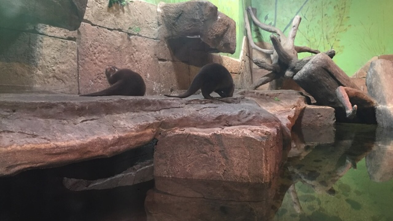 SeaQuest Las Vegas needs help naming new otters
