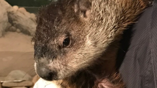 LIVE AT 8:15AM: Woody's Groundhog Day prediction