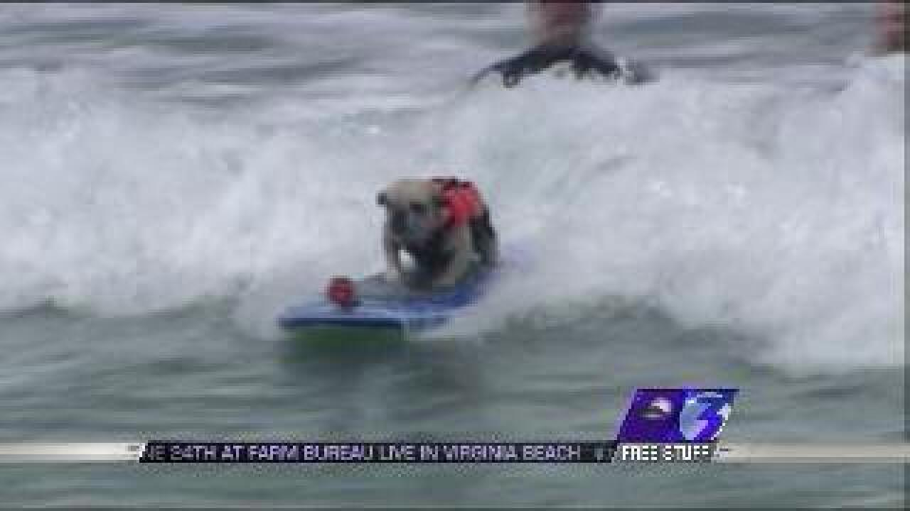 Dog surfing competition raises money for ASPCA