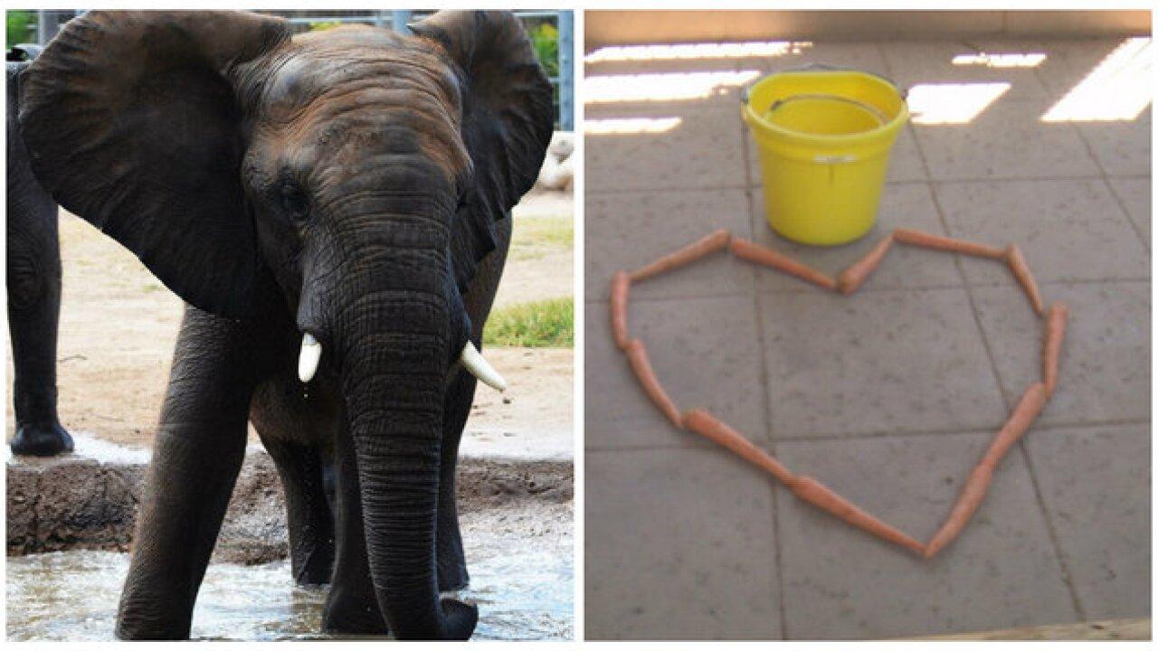 Elephant dies at Reid Park Zoo