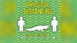 wptv-physcial-distancing-allligator.jpg