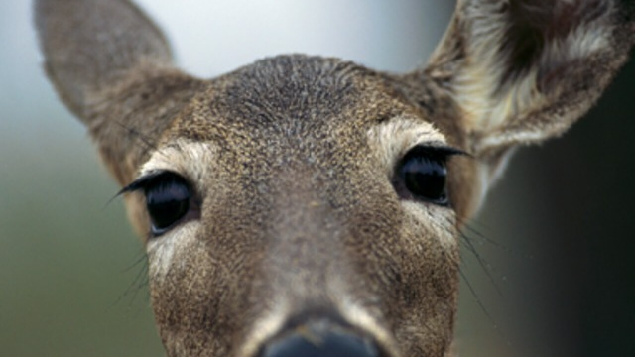 Some Brown County park areas closed during deer gun season