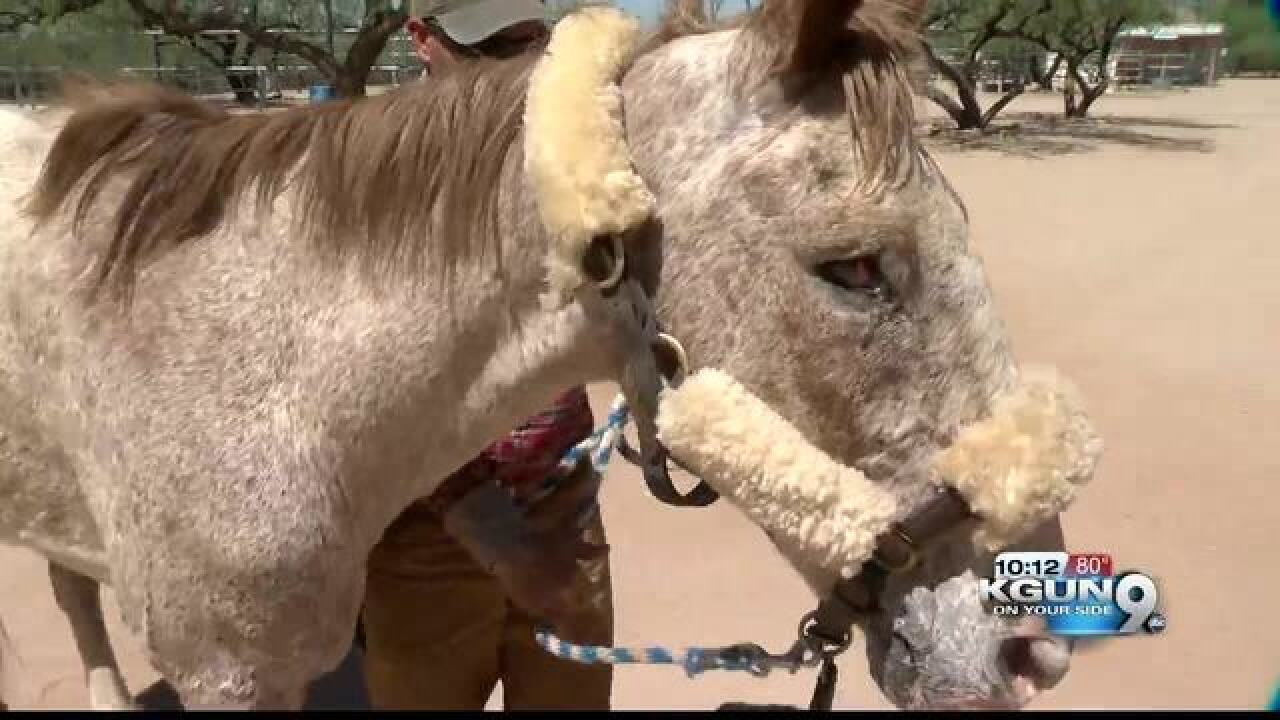Neglected and abused Grand Canyon horse