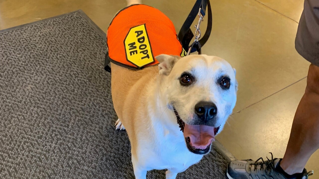 Pacc Waiving Adoption Fees To Celebrate Petsmart National Adoption Weekend