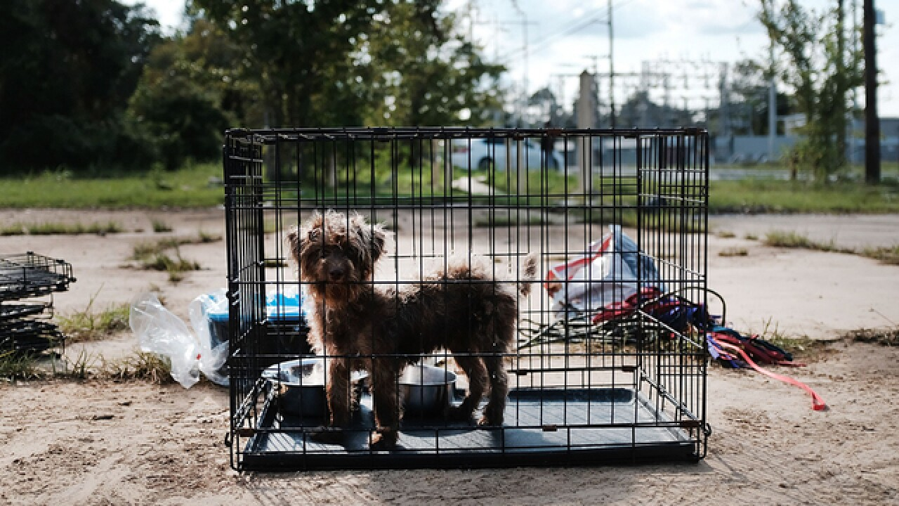 Officials to go after owners who abandoned pets