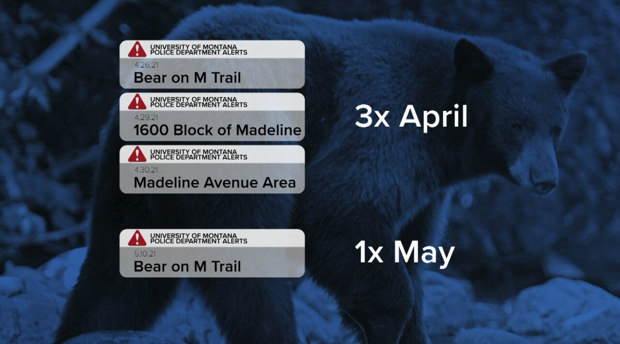 Missoula bear sighting by UMPD