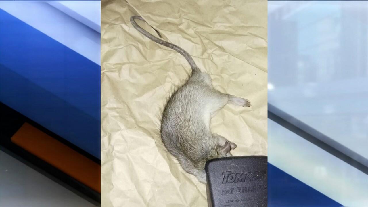 rat infestation.jpg