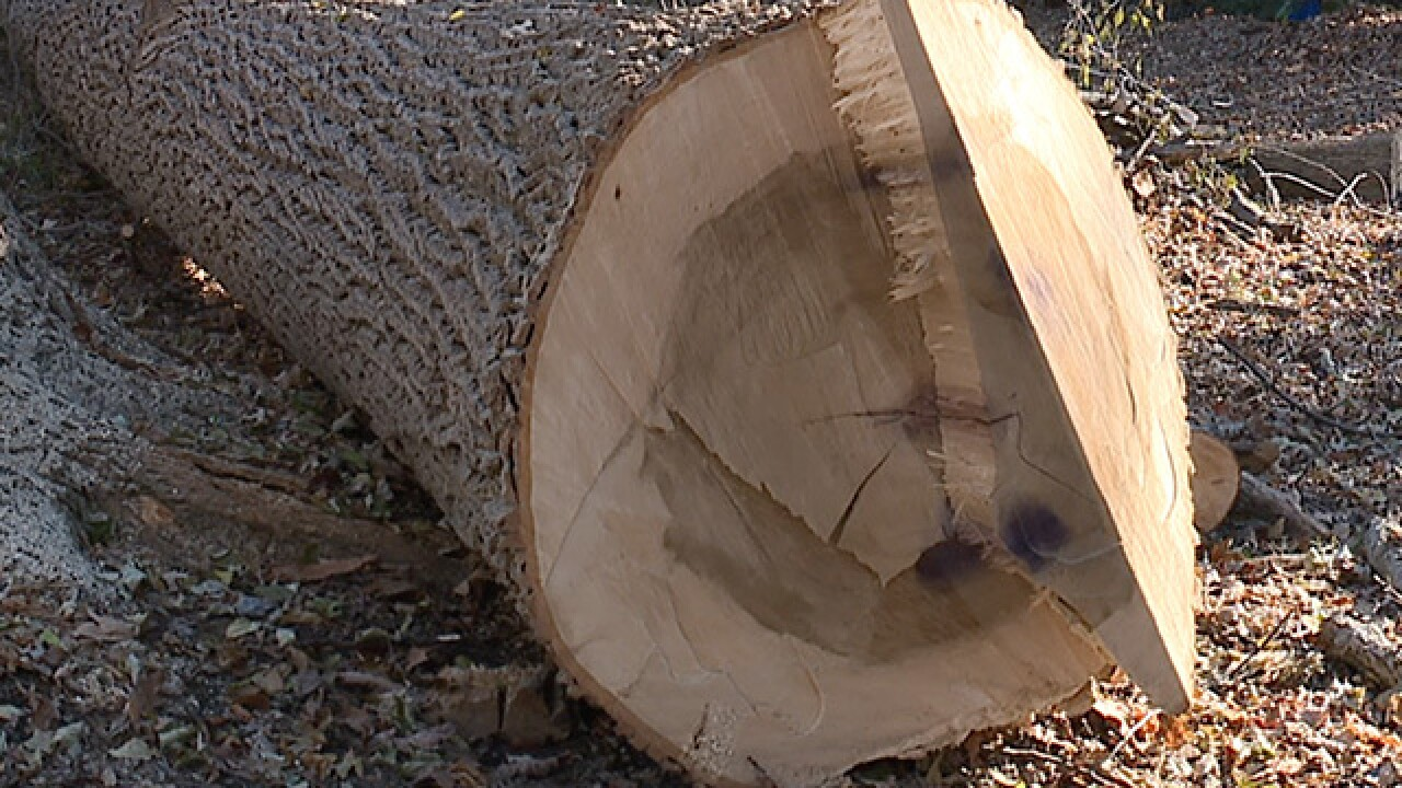 Company drops tree on Ohio home, injures man
