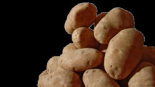 potato generic.png
