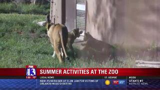 Summer activities at HogleZoo