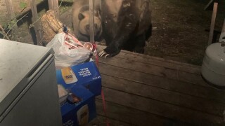 Grizzly bears captured, moved after accessing food attractants