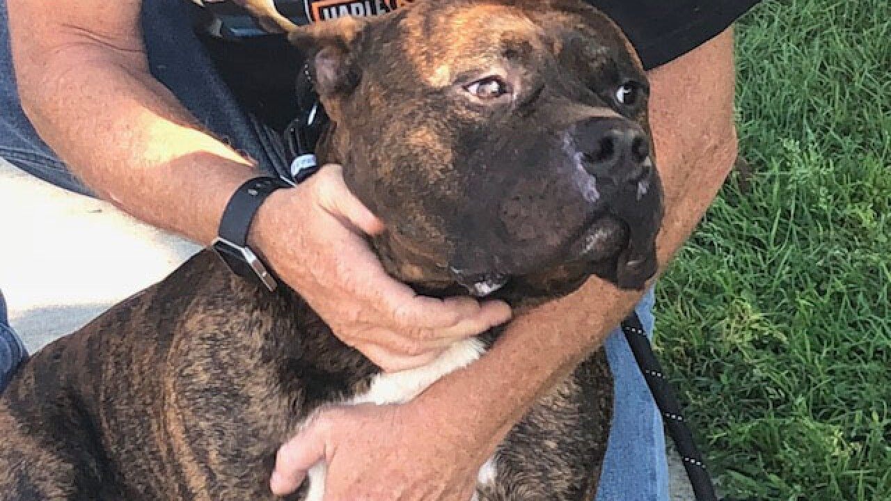 Dog with 110-degree temperature rescued from car