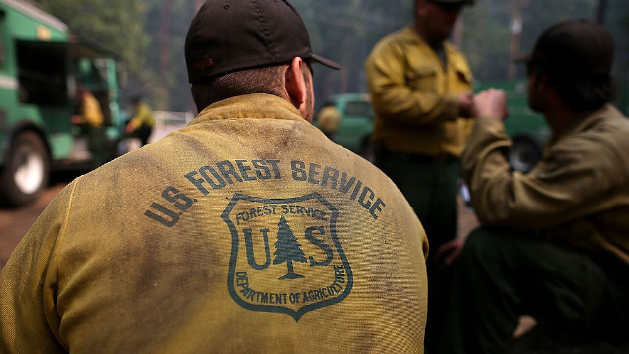 Trump administration expected to cut jobs with Forest Service program restructure