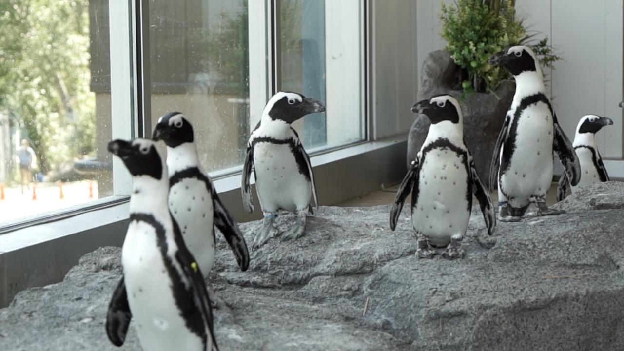 Zoos, aquariums change ways of engagement, education to make money following shutdowns
