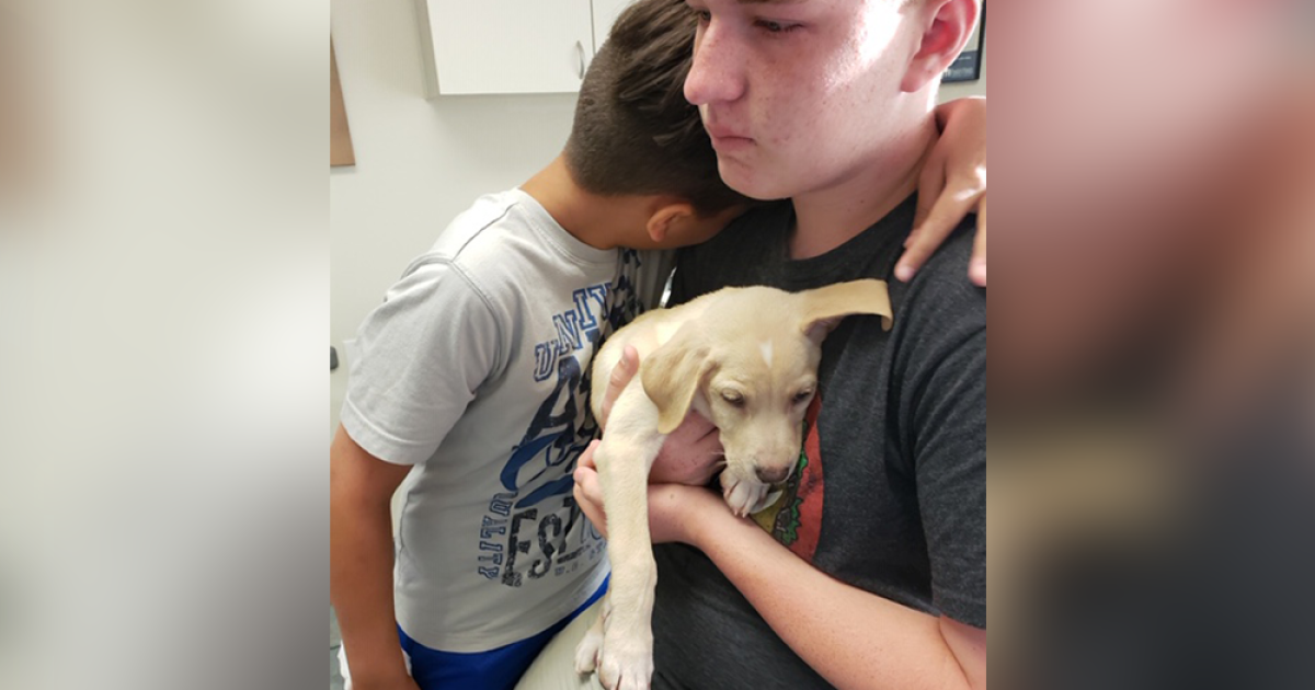 Puppy with deadly virus sold to family on Craigslist ...