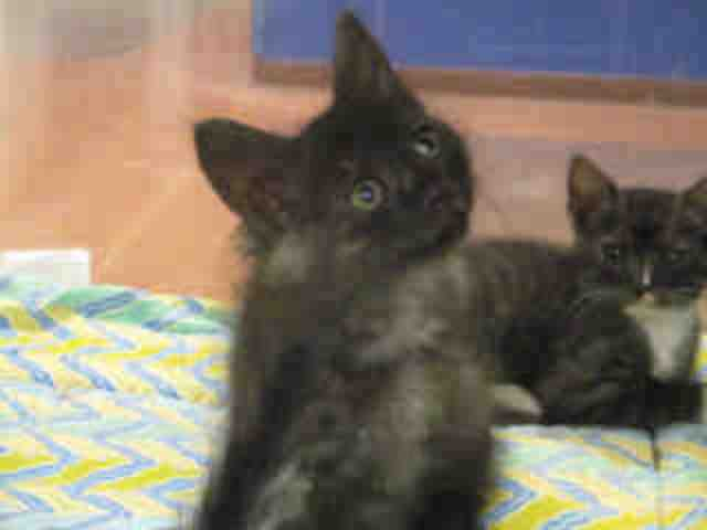 Adoptable pets from Maricopa County Animal Care and Control and Arizona Humane Society (6/6)