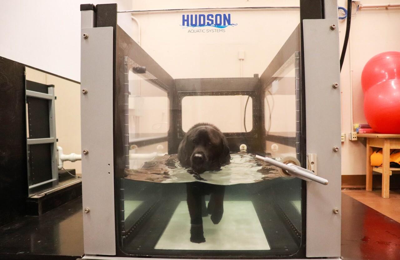 Mitch on a treadmill