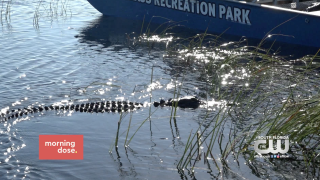 Paws & Claws: Sawgrass Recreation Park