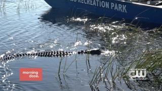 Paws & Claws: Sawgrass RecreationPark