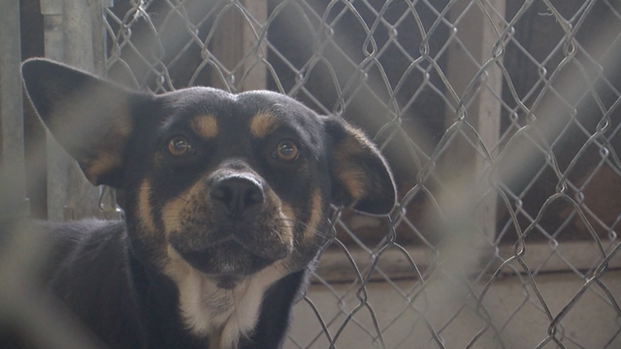 Washington County SPCA beyond capacity